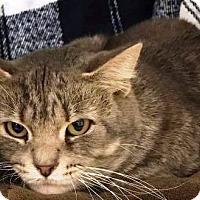 Adopt A Pet :: Webster - Kalamazoo, MI