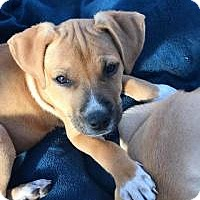 Adopt A Pet :: Minnie - Marlton, NJ