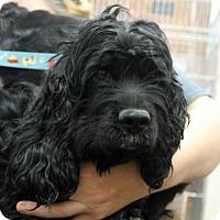 Adopt A Pet :: Jane (and Tarzan - bonded pair) - Waco, TX