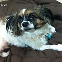 Adopt A Pet :: Bandit & Cooper - Jacksonville, FL