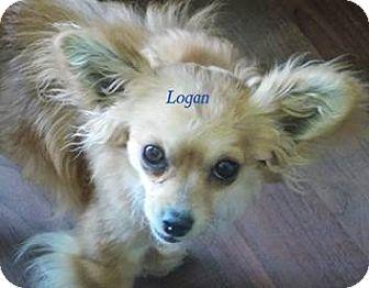 Chihuahua Mix Dog for adoption in San Diego, California - Logan