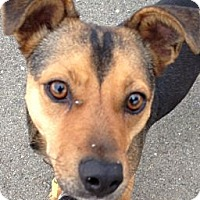 Adopt A Pet :: Trinity - Auburn, CA