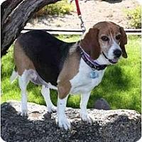 Adopt A Pet :: Bailey Rose - Phoenix, AZ