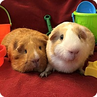 Adopt A Pet :: Fred and Wilma - Fullerton, CA