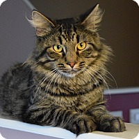 Adopt A Pet :: Majestic- FOSTER NEEDED - Arlington, VA