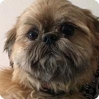 Adopt A Pet :: Chewy - geneva, FL