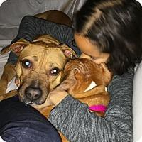 Labrador Retriever Mix Dog for adoption in Gilbertsville, Pennsylvania - Jazy