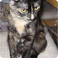 Adopt A Pet :: Sabrina - Catasauqua, PA