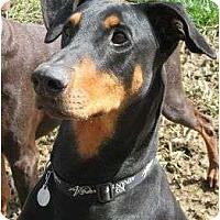 Adopt A Pet :: Duncan--adopted!! - New Richmond, OH