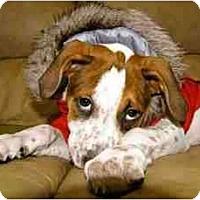 Adopt A Pet :: Bangle - Orlando, FL
