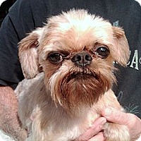 Adopt A Pet :: AJAX - in Rogers, AR. - Little Rock, AR