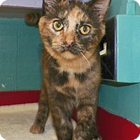 Adopt A Pet :: Reese - Dover, OH