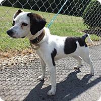 Adopt A Pet :: Sally - Bardonia, NY