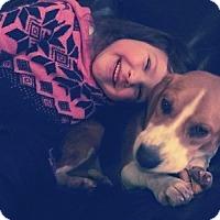 Adopt A Pet :: Sammy-Sue - Hamilton, ON