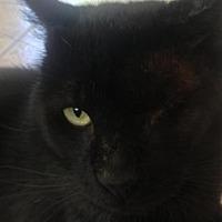 Adopt A Pet :: Larry - Santa Rosa, CA