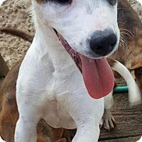 Adopt A Pet :: Shiya - Baltimore, MD