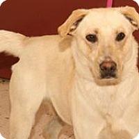 Adopt A Pet :: Haystack - McDonough, GA