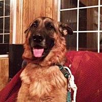 German Shepherd Dog Dog for adoption in San Diego, California - Roxie