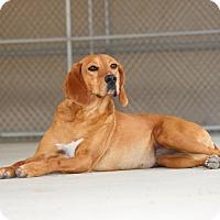 Adopt A Pet :: Kay-Adoption Pending - Pinehurst, NC