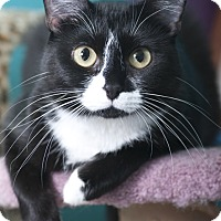 Adopt A Pet :: Alexis - Chicago, IL