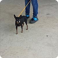Adopt A Pet :: Katy - San Antonio, TX