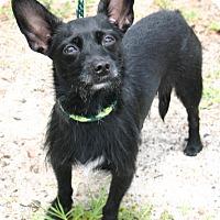 Adopt A Pet :: Dancing TUTU!!! - Ft Myers Beach, FL