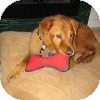 Adopt A Pet :: Chunk - Yorktown, VA