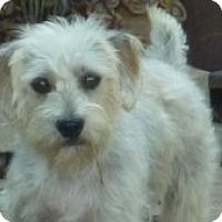 Adopt A Pet :: Summer - Raleigh, NC