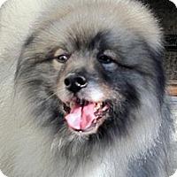 Adopt A Pet :: Guido - Los Altos, CA