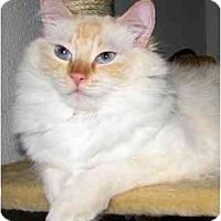 Adopt A Pet :: Wilson - Keizer, OR