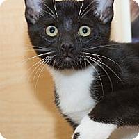 Adopt A Pet :: Clint - Irvine, CA