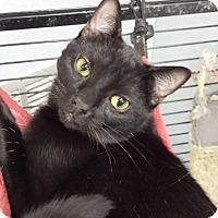 Adopt A Pet :: Bruce Willis - Richboro, PA