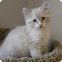 Adopt A Pet :: Minnie - Davis, CA