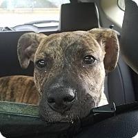 Adopt A Pet :: Kielle - Jasper, GA