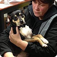 Adopt A Pet :: Mindi - Geneseo, IL