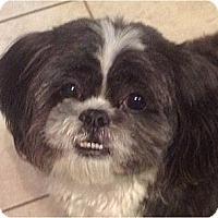 Adopt A Pet :: Lenny-NC - Chapel Hill, NC