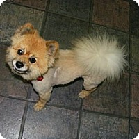 Adopt A Pet :: Orien - South Amboy, NJ