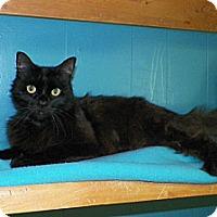 Adopt A Pet :: Veronica - Dover, OH