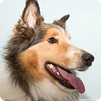 Adopt A Pet :: Vance - Cumberland, MD