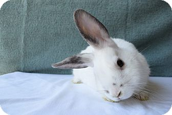 Other/Unknown Mix for adoption in Fountain Valley, California - Dotty