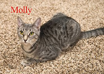 Domestic Shorthair Kitten for adoption in Baltimore, Maryland - Molly