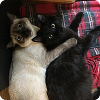 Adopt A Pet :: Mishka and T'Challah - Novato, CA