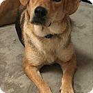 Adopt A Pet :: Sabrinnah