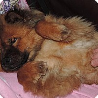 Adopt A Pet :: Bowie **ADOPTED** - Prescott, ON