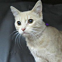 Adopt A Pet :: Marbles - Herndon, VA