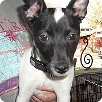 Adopt A Pet :: Skeeter - Memphis, TN