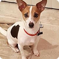 Adopt A Pet :: Ellouise - Carlsbad, CA