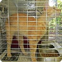 Adopt A Pet :: Codey - Chesapeake, VA