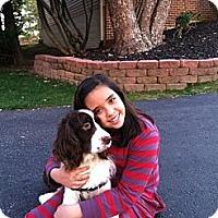 Adopt A Pet :: Bailey - Alexandria, VA