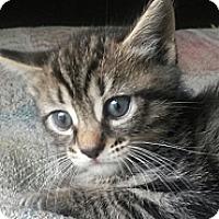 Adopt A Pet :: Chubb - Ft. Lauderdale, FL